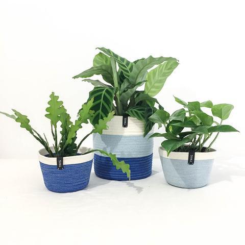 Twig Plants and Pots - Marine concrete indoor plant pot