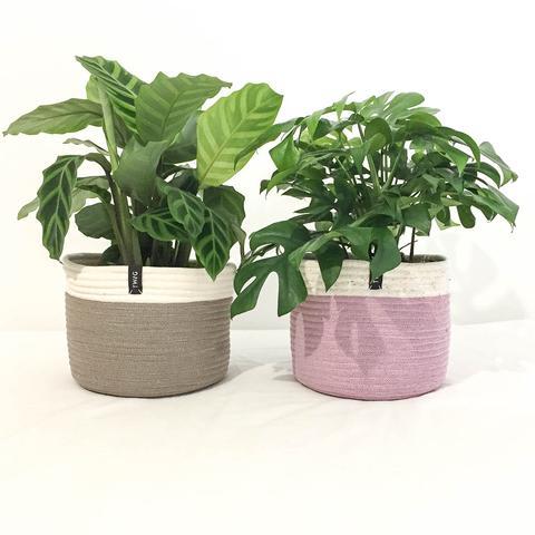 Twig Plants and Pots - Fairytale concrete indoor plant pot