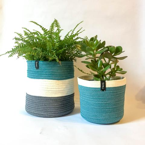 Twig Plants and Pots - Peacock concrete indoor plant pot