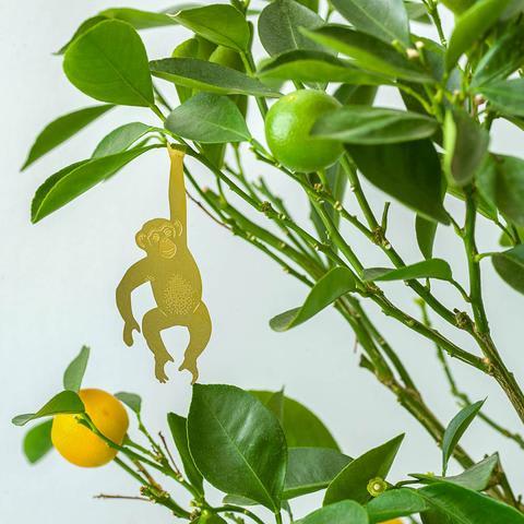 Plant Animals - Chimpanzee