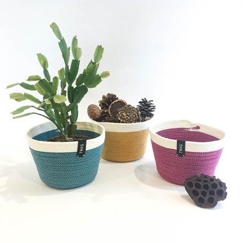 Twig Plants and Pots - Bright Bundle concrete indoor plant pot
