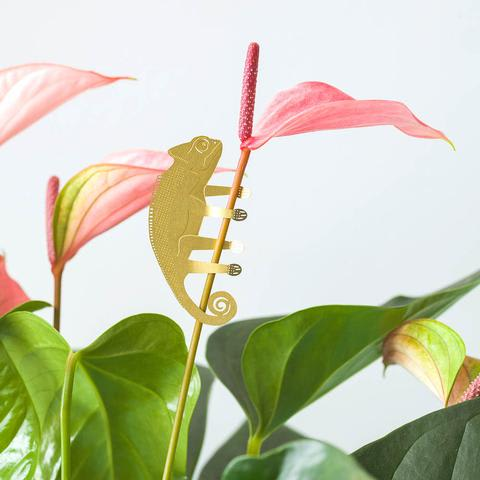 Plant Animals - Chameleon