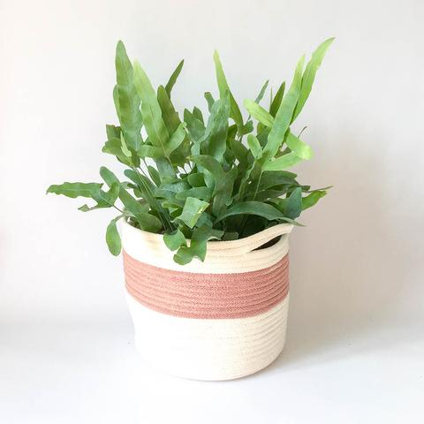 Twig Plants and Pots - Belle concrete indoor plant pot
