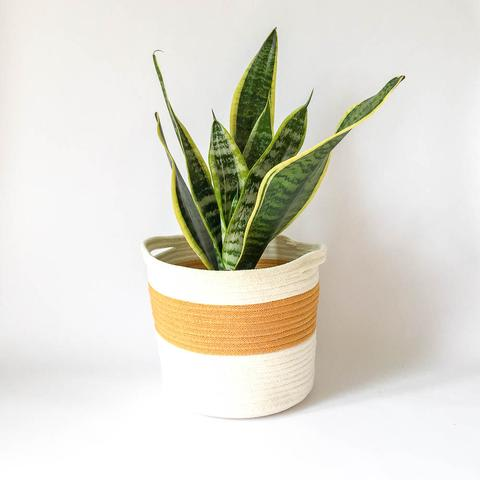 Twig Plants and Pots - Honey concrete indoor plant pot