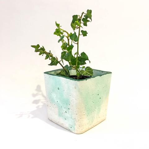 Twig Plants and Pots - Moss Pot concrete indoor plant pot