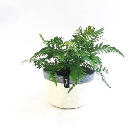 Cotton Pot - Misty
