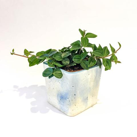 Twig Plants and Pots - April Showers concrete indoor plant pot
