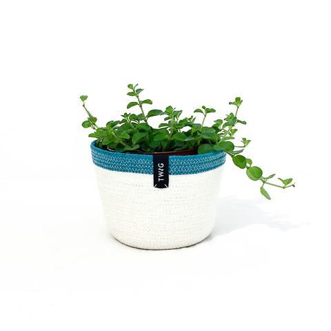 Cotton Pot - Bluebird