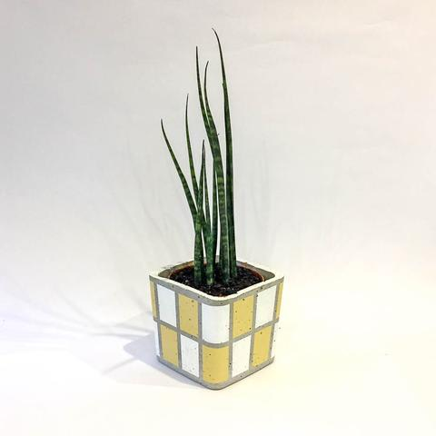 Twig Plants and Pots - Sunny concrete indoor plant pot