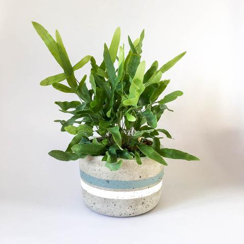 Twig Plants and Pots - Circle of Sage concrete indoor plant pot