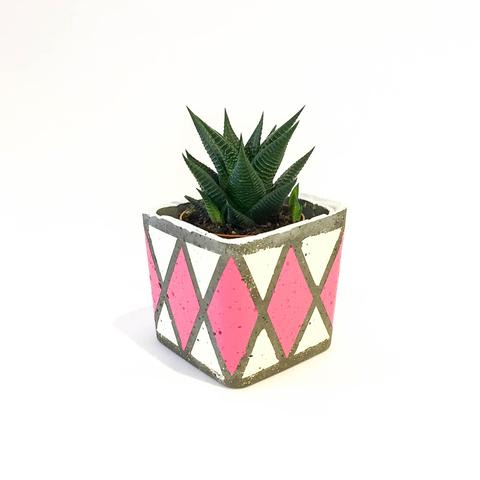 Twig Plants and Pots - Diamonds are Forever concrete indoor plant pot