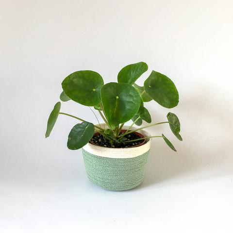 Twig Plants and Pots - Eucalyptus concrete indoor plant pot