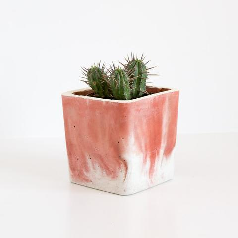 Twig Plants and Pots - Firefly concrete indoor plant pot