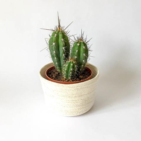 Twig Plants and Pots - Glitsy concrete indoor plant pot