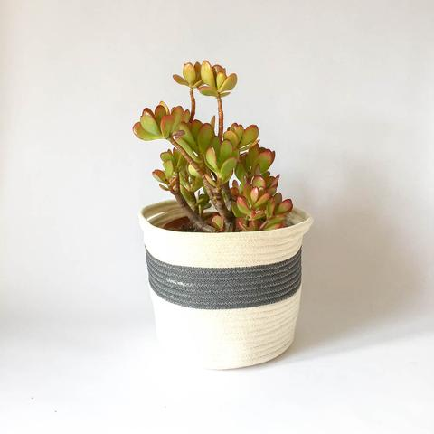 Twig Plants and Pots - Granite concrete indoor plant pot