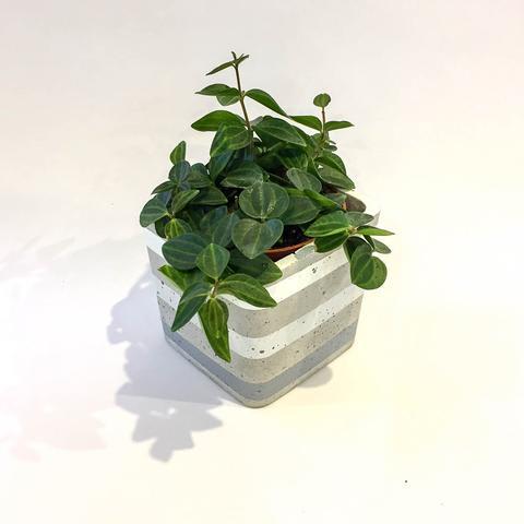 Twig Plants and Pots - Grey Skies concrete indoor plant pot