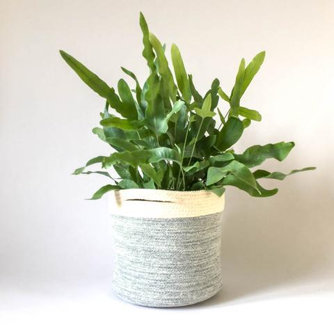 Twig Plants and Pots - Jeans concrete indoor plant pot