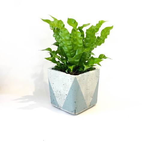 Twig Plants and Pots - Icicle concrete indoor plant pot