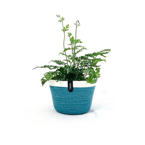 Cotton Pot - Kingfisher