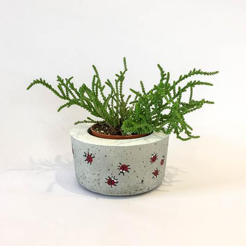Twig Plants and Pots - Ladybird concrete indoor plant pot