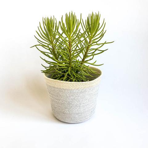 Twig Plants and Pots - Wolf concrete indoor plant pot