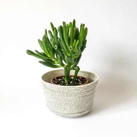 Twig Plants and Pots - Mono concrete indoor plant pot