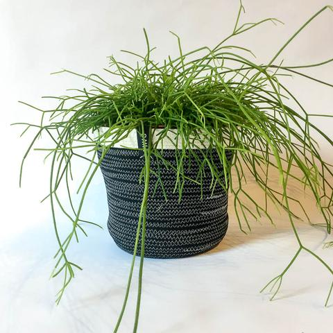 Twig Plants and Pots - Panther concrete indoor plant pot