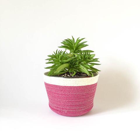 Twig Plants and Pots - Plum concrete indoor plant pot