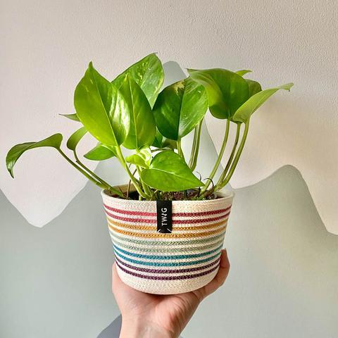 Cotton Pot - Rainbow