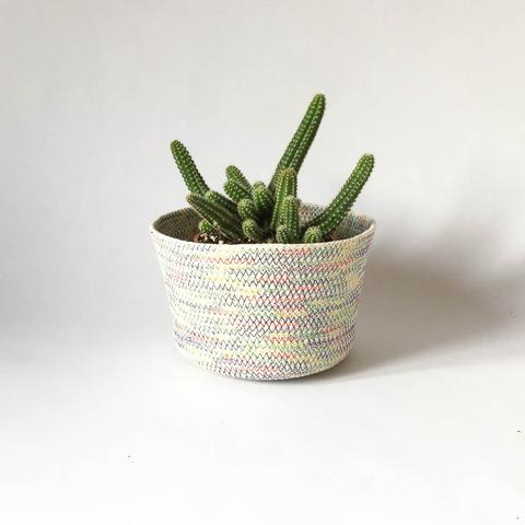 Twig Plants and Pots - Rainbow concrete indoor plant pot