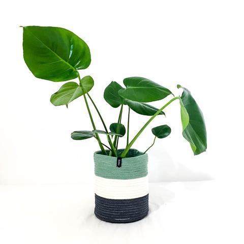 Cotton Pot - Sage