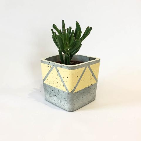 Twig Plants and Pots - Sandstorm concrete indoor plant pot