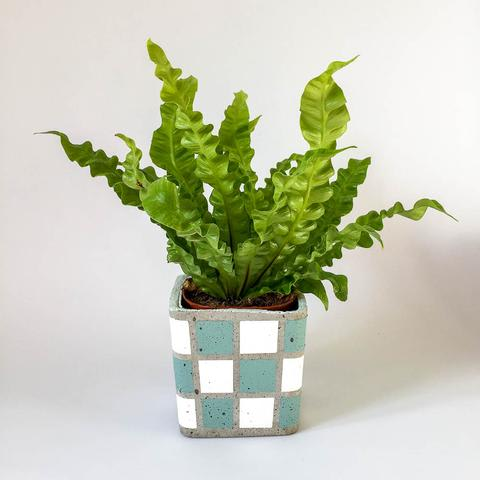 Twig Plants and Pots - Seaweed concrete indoor plant pot