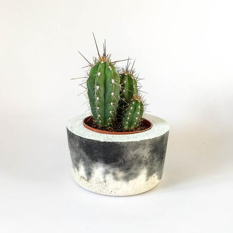 Twig Plants and Pots - Storm concrete indoor plant pot