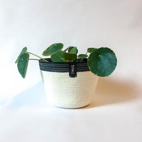 Twig Plants and Pots - Stripe concrete indoor plant pot