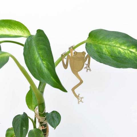 Plant Animals - Tree Frog