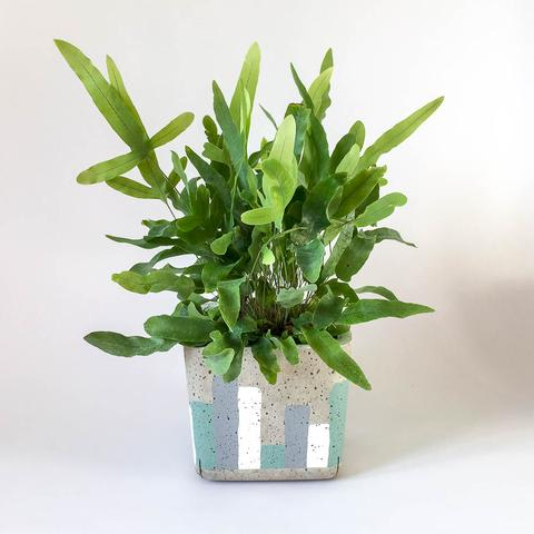 Twig Plants and Pots - Urban Jungle concrete indoor plant pot