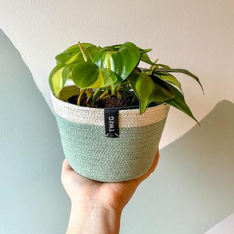 Cotton Pot - Glitter