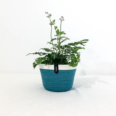 Twig Plants and Pots - Kingfisher concrete indoor plant pot