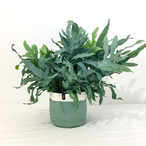 Twig Plants and Pots - Moss concrete indoor plant pot