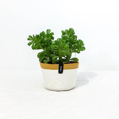 Cotton Pot - Saffron