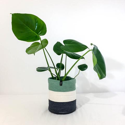 Twig Plants and Pots - Sage concrete indoor plant pot