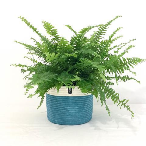 Twig Plants and Pots - Seagrass concrete indoor plant pot