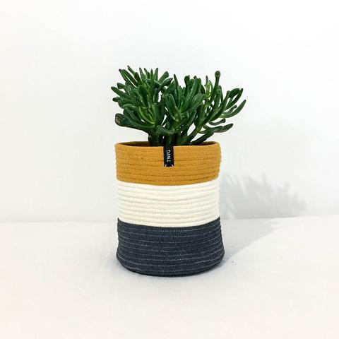 Twig Plants and Pots - Teddy concrete indoor plant pot