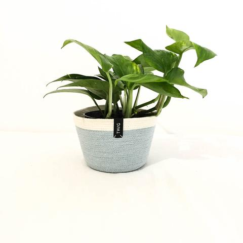 Cotton Pot - Aqua