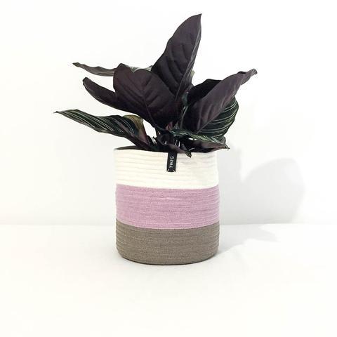 Cotton Pot - Neapolitan