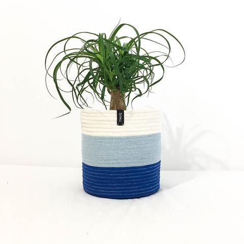 Twig Plants and Pots - Seaside concrete indoor plant pot