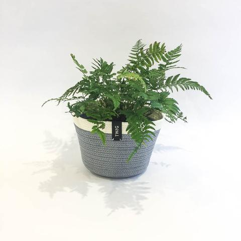 Twig Plants and Pots - Shadow concrete indoor plant pot