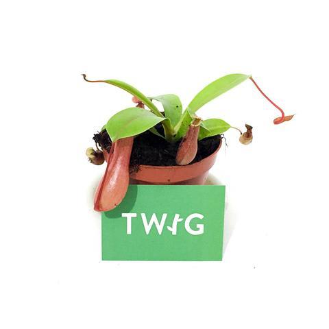 Plant - Carnivorous Plant Mix