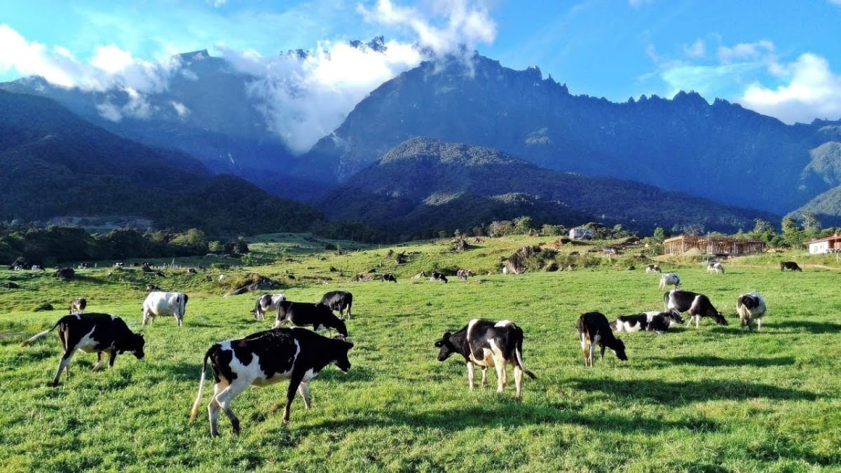 Kundasang Tour Packages & Holidays With Tripfez